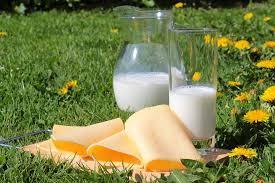 牛乳とチーズ・加工食品